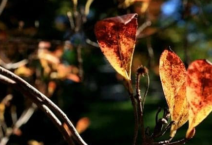A Poem about Autumn: You Think the Reason